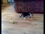 Котёнок и ящерицы)