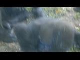 Take2 Сегодня в сафари Рамат-Ган: малыш горилла